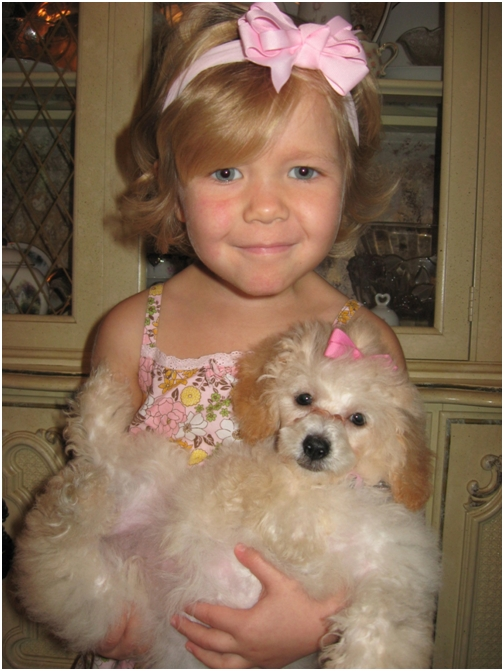 nov-27-2007-adelaine-and-daisy-baby-toy-poodle