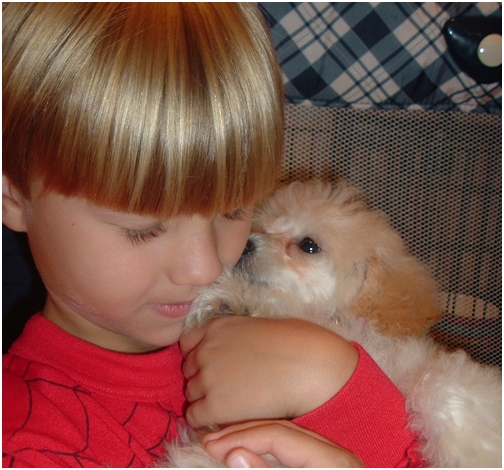 nov-27-2007-bowen-and-daisy-baby-toy-poodle