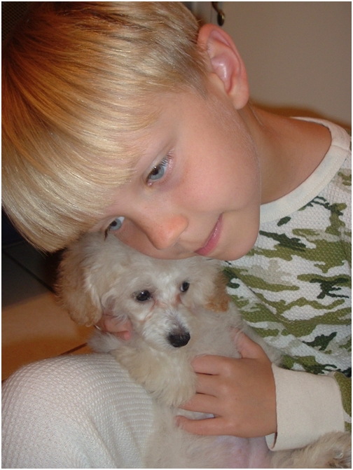 nov-27-2007-mason-and-daisy-baby-toy-poodle